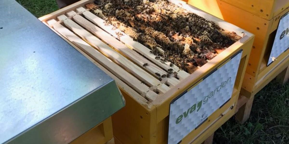 Bienen Und Der Winter In Saalbach
